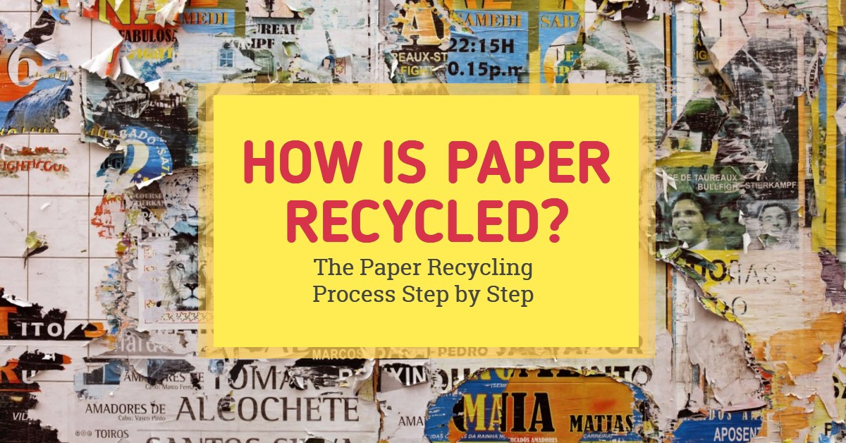 How is Paper Recycled? The Paper Recycling Process Step by Step